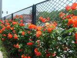 小区浸塑围墙护栏